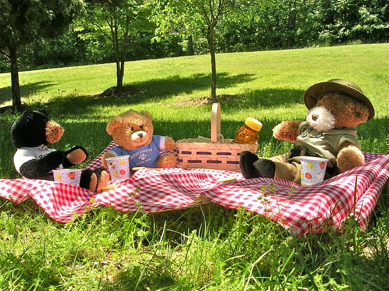 FUN THINGS TO DO AT HOME FOR FREE! - teddy bears picnic by virginia state parks