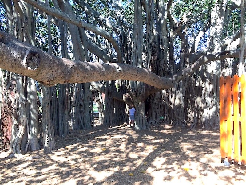 tree branch slide at new farm park pic
