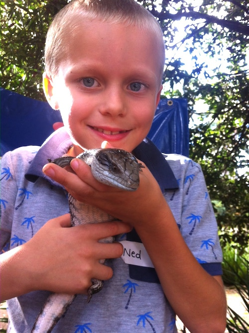 macadamia castle ned with blue tongue lizard pic