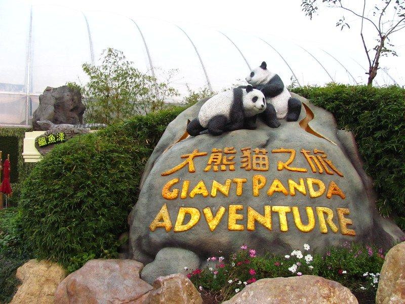 ocean park giant panda adventure by jeremy thompson