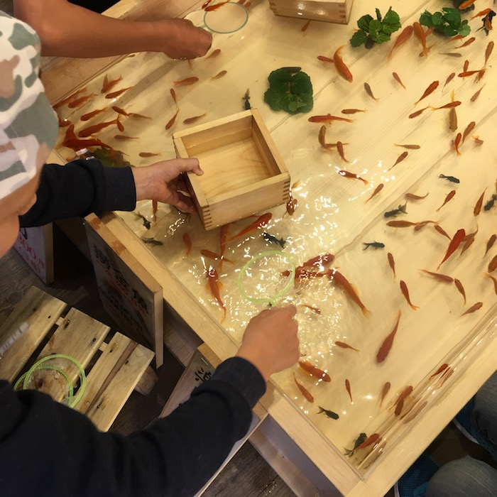 goldfish scooping game at asakusa kingyo