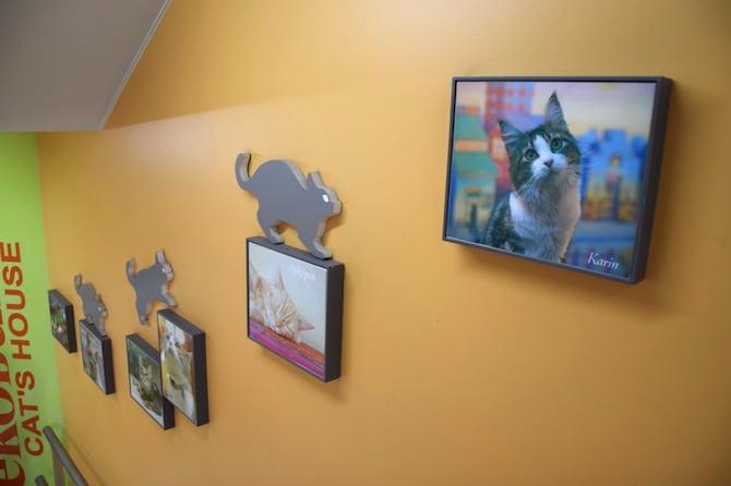 tokyo cat cafe ikebukuro wall display