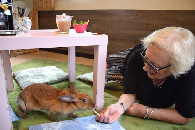 harajuku rabbit cafe mum feeding rabbit