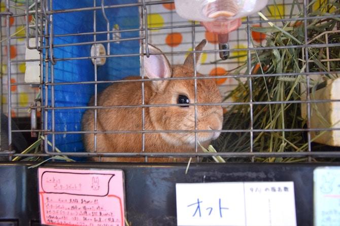 harajuku rabbit cafe orange