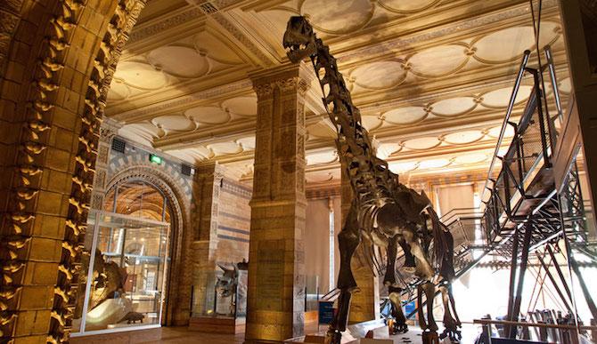 Dinosaur-Gallery-&-Mammals