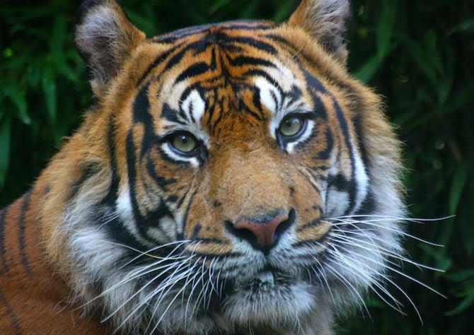 Best zoo in London
