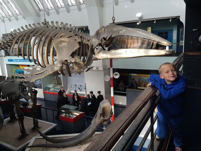 natural history museum london with kids animal hall