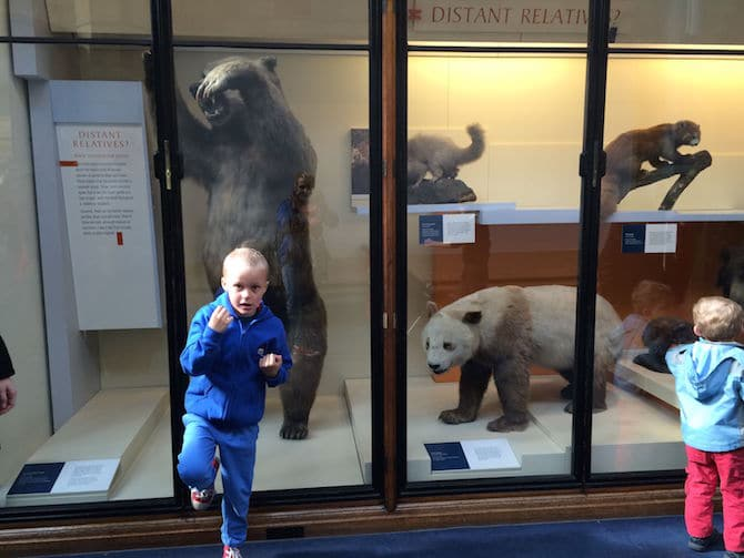 natural history museum london with kids bear pose