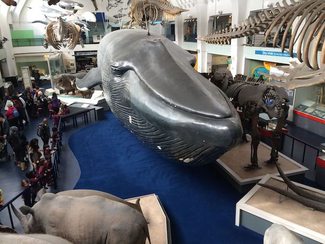 natural history museum london with kids whale hall