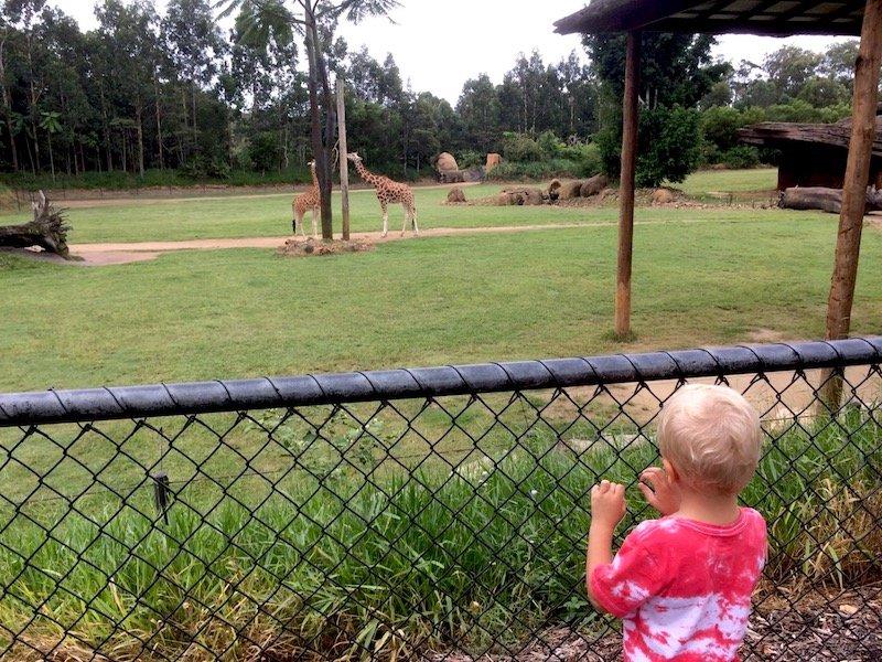 australia zoo african savannah pic