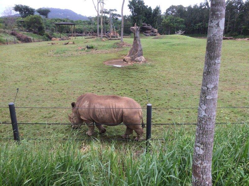 australia zoo rhino pic