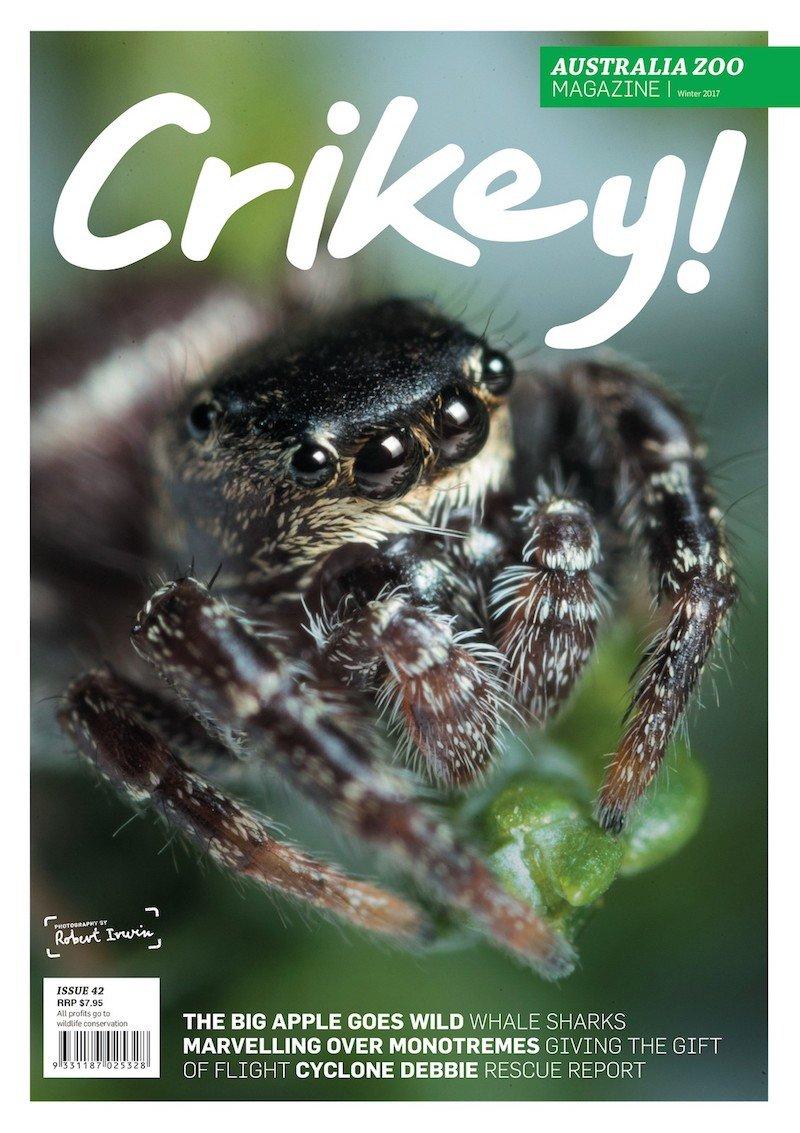 crikey magazine australia zoo pic
