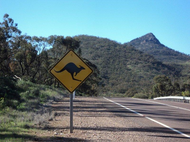 webjet car rental kangaroo sign