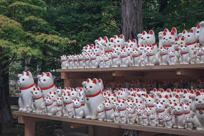 Lucky cat temple