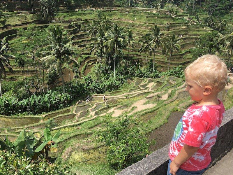bali rice terraces tellagagalang pic 800