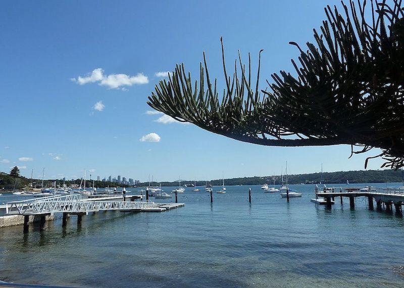 watsons bay norfolk island tree pic
