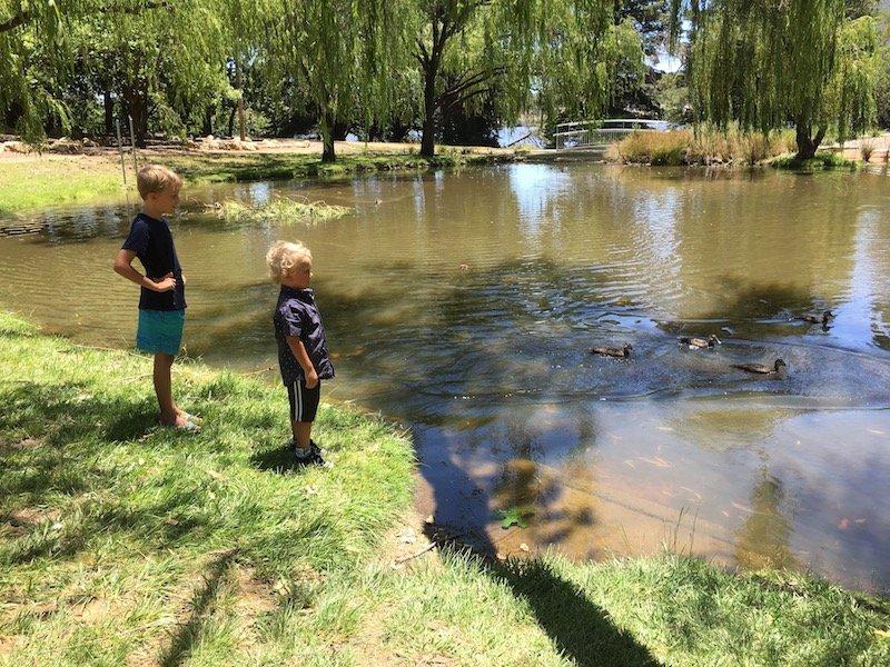 Yarralumla Park Canberra duck pond pic