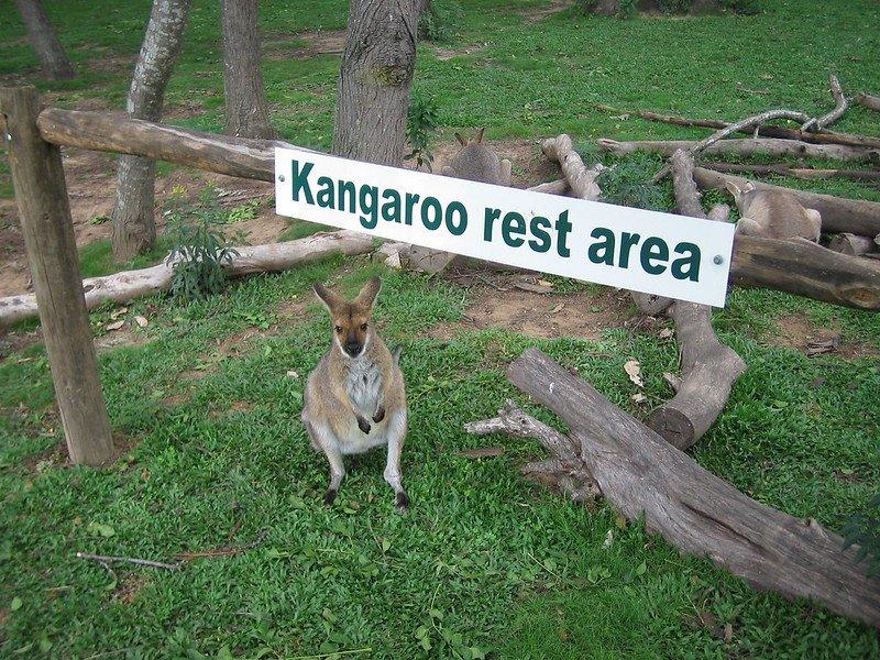 kangaroo rest area by yusuke kawasaki