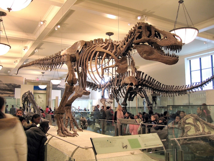American Museum of Natural History. Visit ROAM THE GNOME FAMILY TRAVEL WEBSITE. Hundreds of fun ideas & activities to help you plan & book your next family vacation or weekend adventure