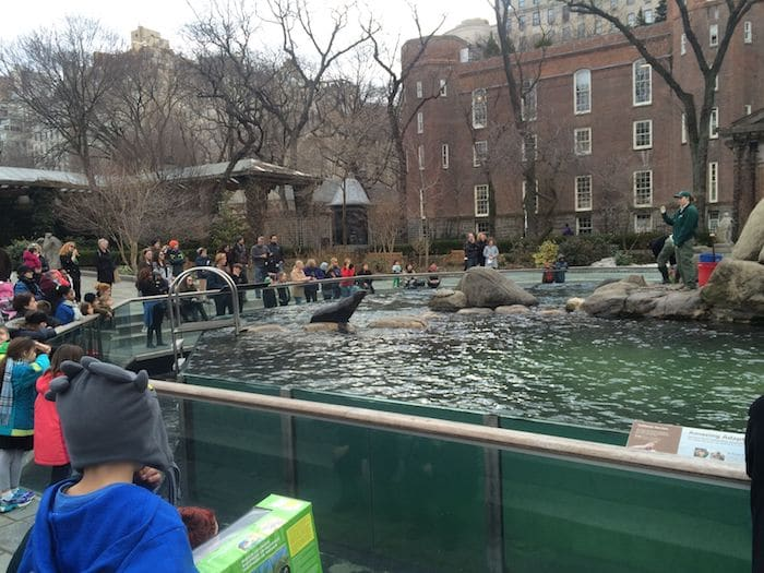 Best Zoo in New York- Central Park Zoo. ROAM THE GNOME Family Travel Website. Hundreds of fun ideas and activities to help you plan and book your next family vacation or weekend adventure