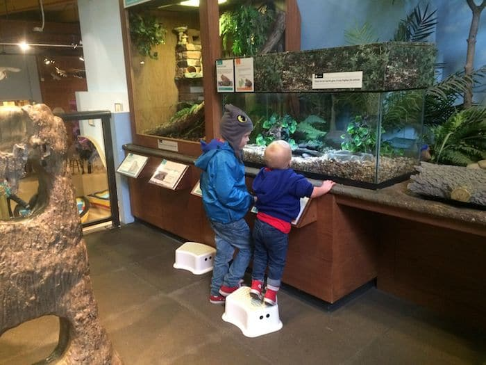 Neighbourhood Nature at Brooklyn Children's Museum in NYC. ROAM THE GNOME Family Travel Website. Hundreds of fun ideas and activities to help you plan and book your next family vacation or weekend adventure.