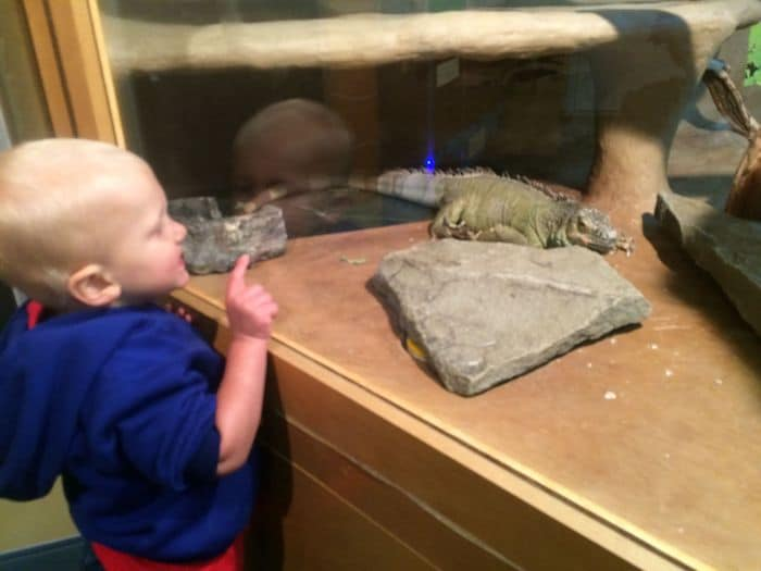 Reptiles at Brooklyn Childrens Museum in NYC. ROAM THE GNOME Family Travel Website. Hundreds of fun ideas and activities to help you plan and book your next family vacation or weekend adventure.