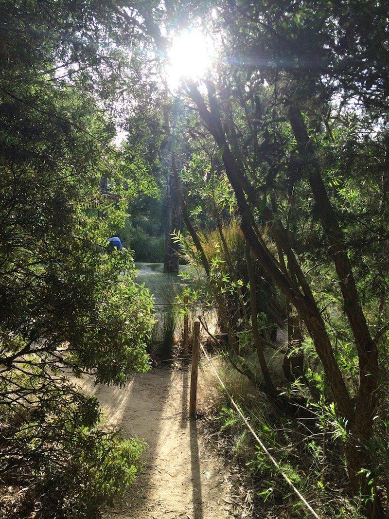 Ian Potter Childrens Garden Melbourne sunlit forest opening pic