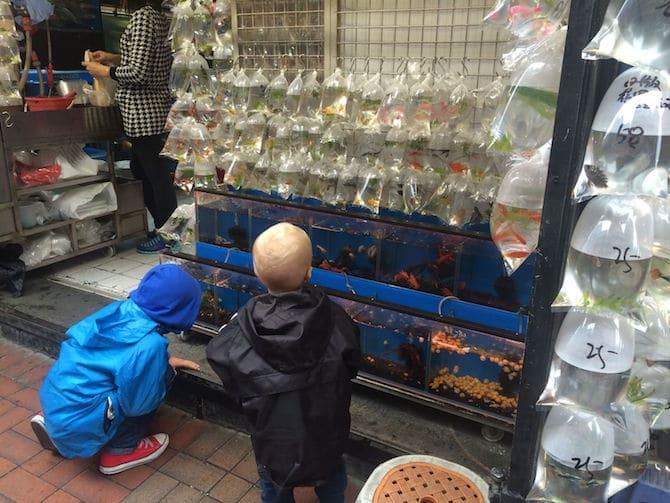 hong kong goldfish market pic
