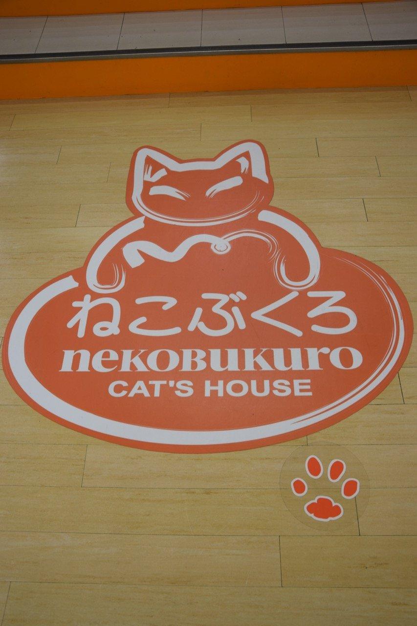 image - tokyo cat cafe nekobukuro