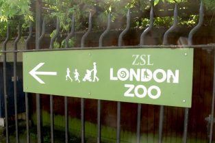 how to get to london zoo - this way sign by elliott brown flickr