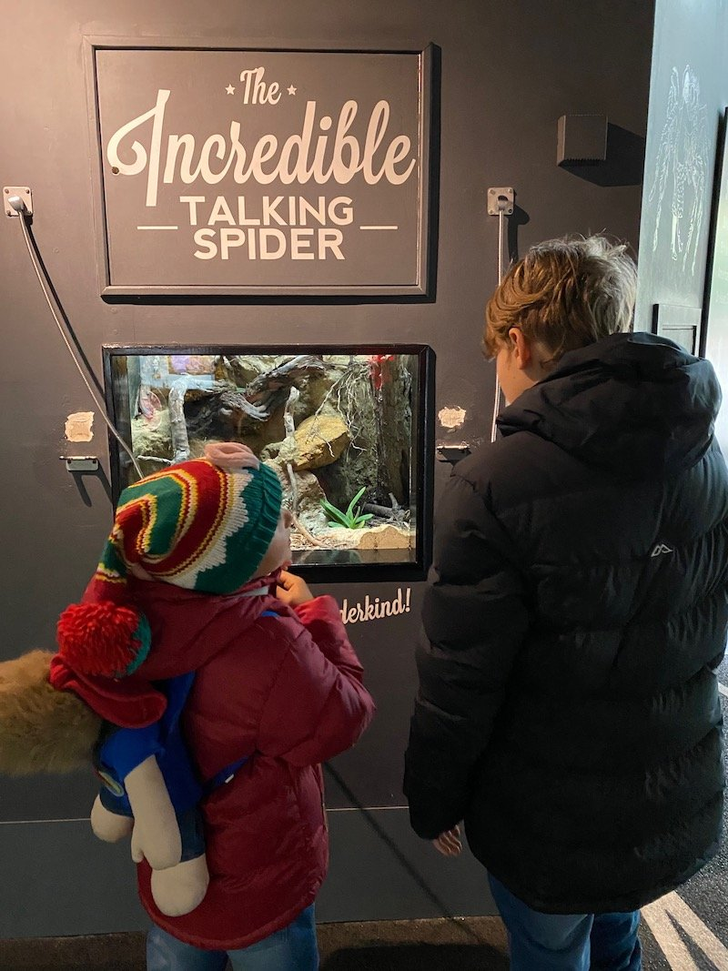 image - bedbugs sleepover at the zoo london talking spider