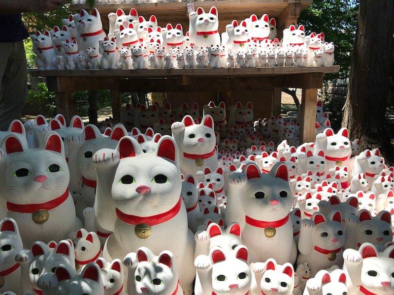image - gotokuji temple cat temple maneki neko