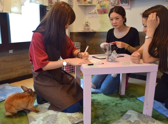 image - harajuku rabbit cafe girls ordering