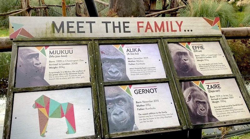image - london zoo gorillas sign
