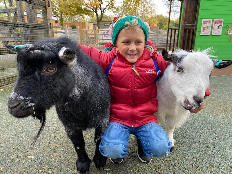image - london zookeeper for the day farm animals
