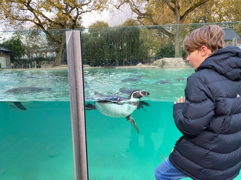image - ned with penguins at london zookeeper