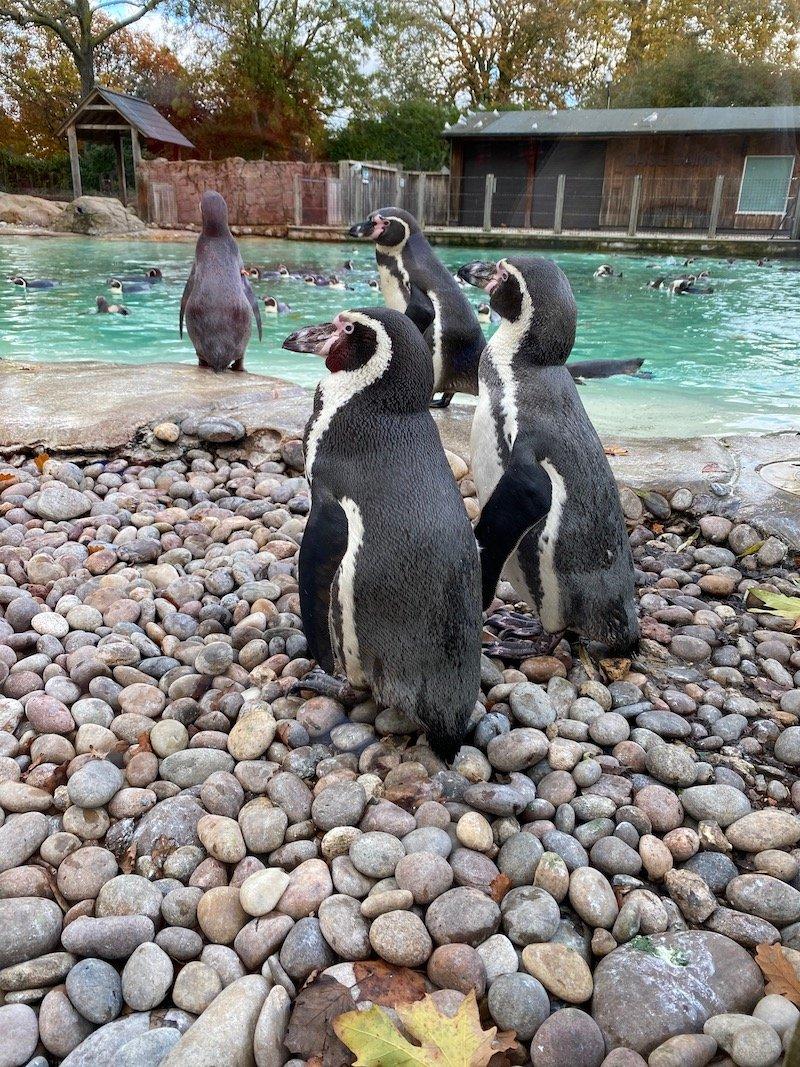 image - penguin beach at london zoo