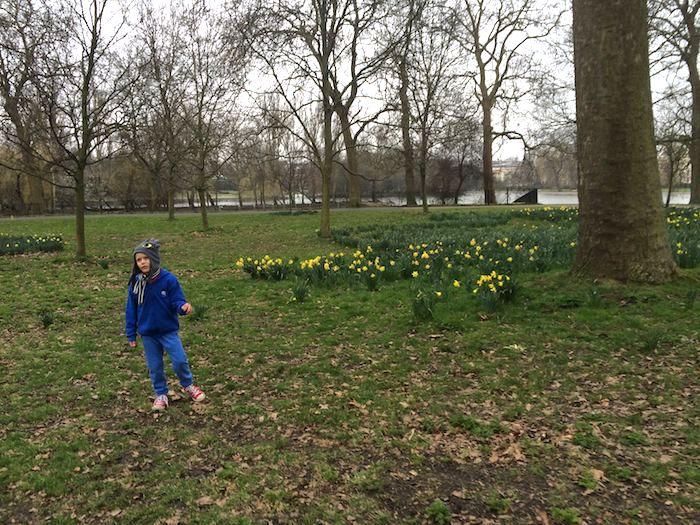 image - regents park Tulips 2