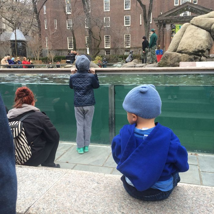 image - central park zoo for kids jack at sea lions new york