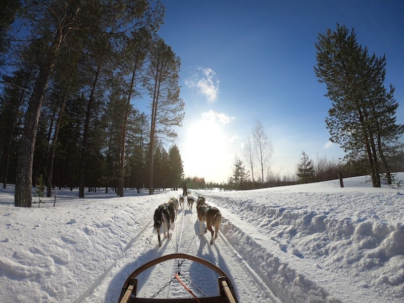dog sledding by pexels-lars-ley-2531014
