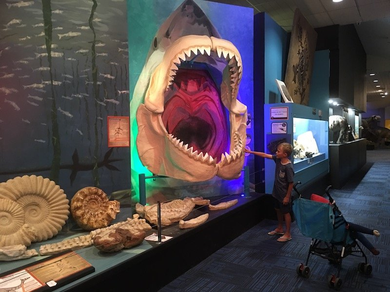 giant shark jaw pic