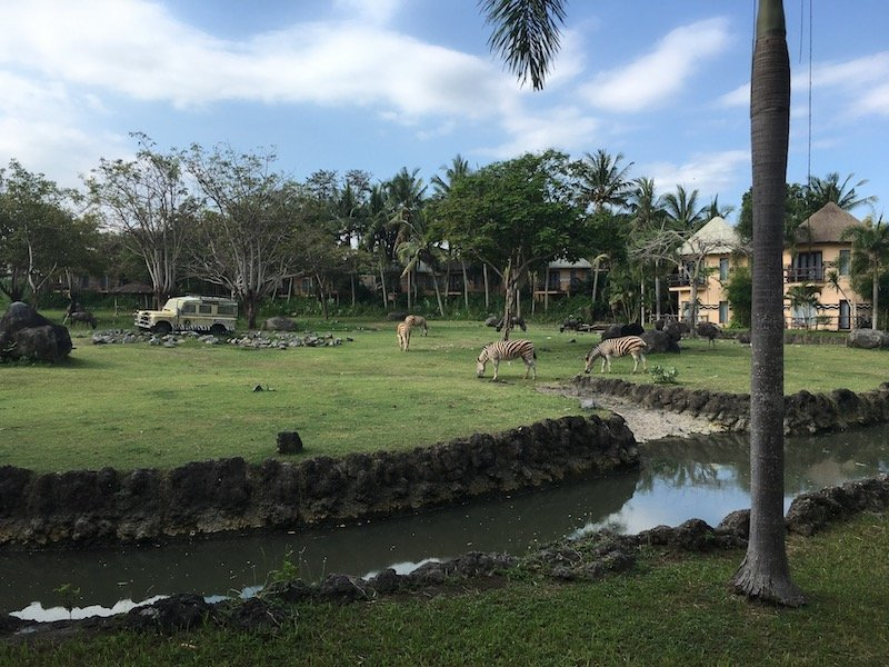 avoid mosquitos in bali - mara river lodge moat