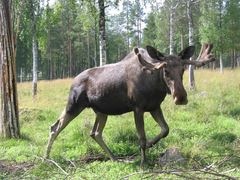things to do in rovaniemi in summer ranua zoo