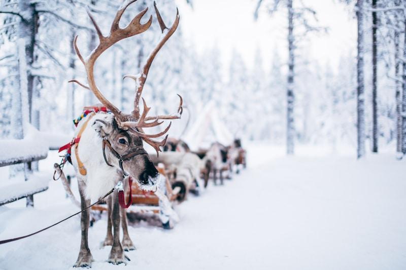 reindeer-ride-santa-claus-village-rovaniemi-lapland-finland (19)