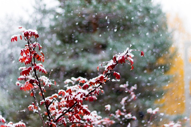 rovaniemi snow blooms by mathieu cheviron