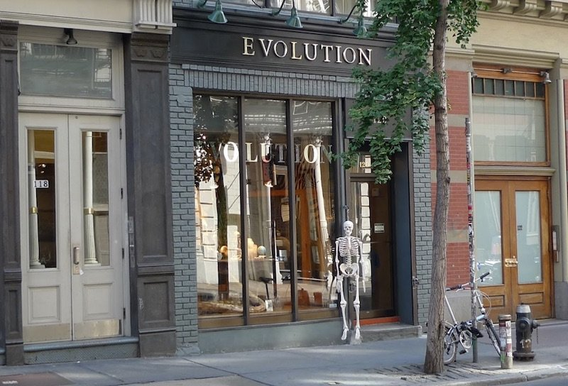 the evolution store new york pic
