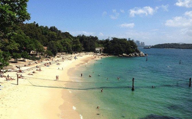 shark-beach sydney pic