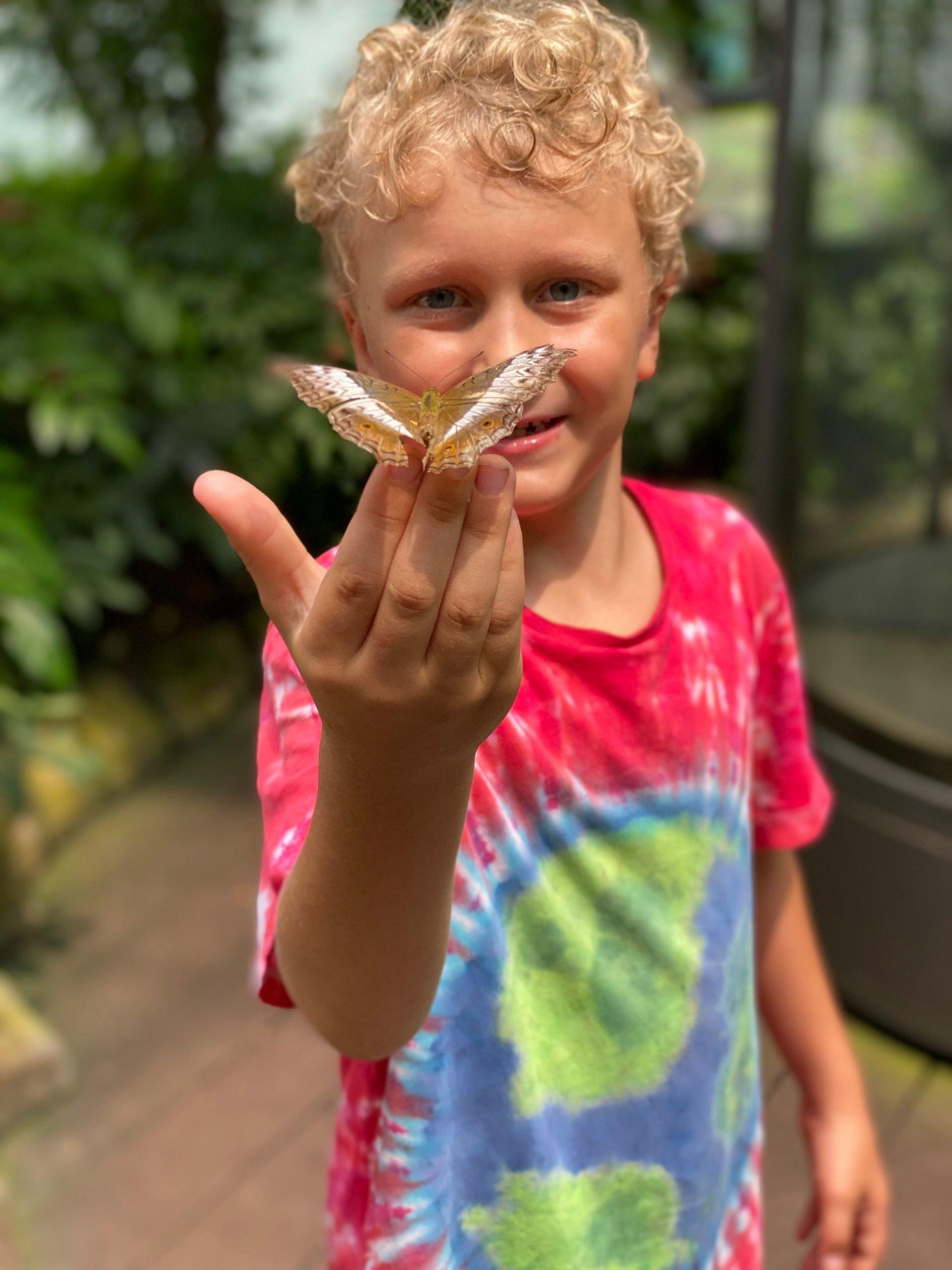 butterfly garden changi airport 800