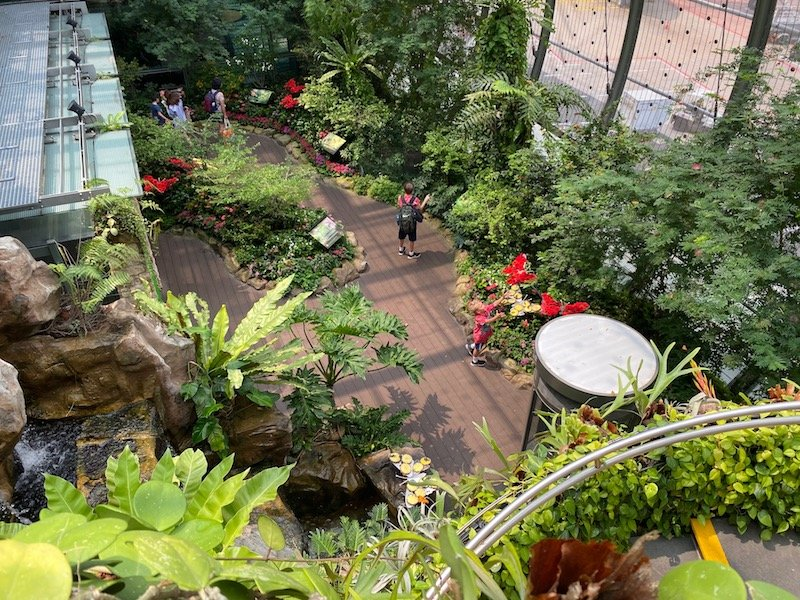 butterfly garden changi airport singapore grotto pic 800