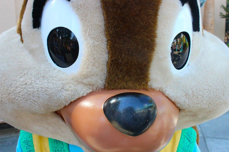 chip close up disneyland by bailey